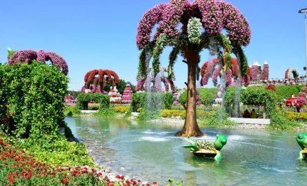 Tolle Blumenpracht im Miracle Garden und Butterfly Garden in Dubai