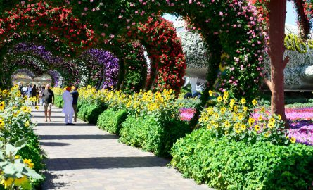 Dubai Miracle Garden Tickets