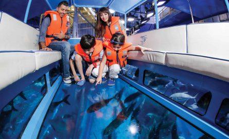Haie beobachten vom Boot im Dubai Aquarium