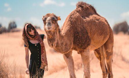 Kamele für ein Fotoshooting in Dubai